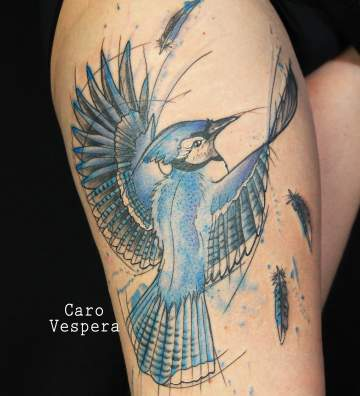 Geai bleu - Caro Vespera